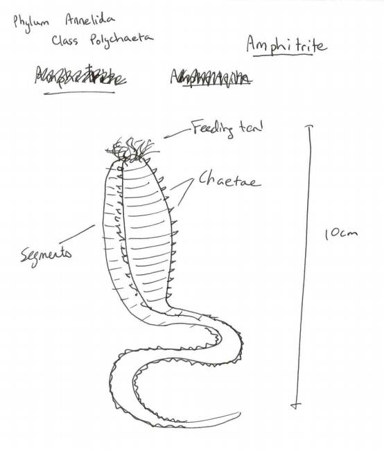 Specimen Of Invertebrate Zoology