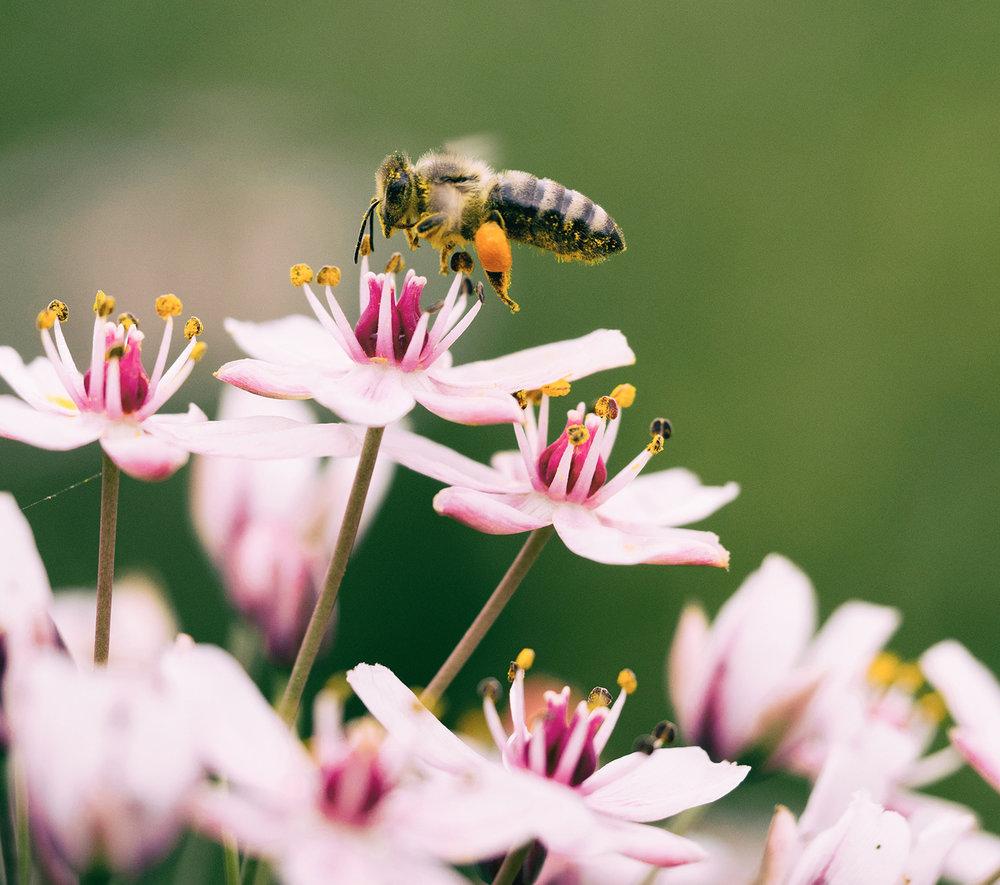 Μελισσοθεραπεία-Μελισσοβελονισμός (Apitherapy) - Η μελισσοθεραπεία είναι η θεραπευτική τεχνική που χρησιμοποιεί τα προϊόντα της μέλισσας. Μελισσοβελονισμός ειδικότερα, είναι η τεχνική κατά την οποία εγχύουμε το δηλητήριο της μέλισσας σε διάφορα σημεία του σώματος.