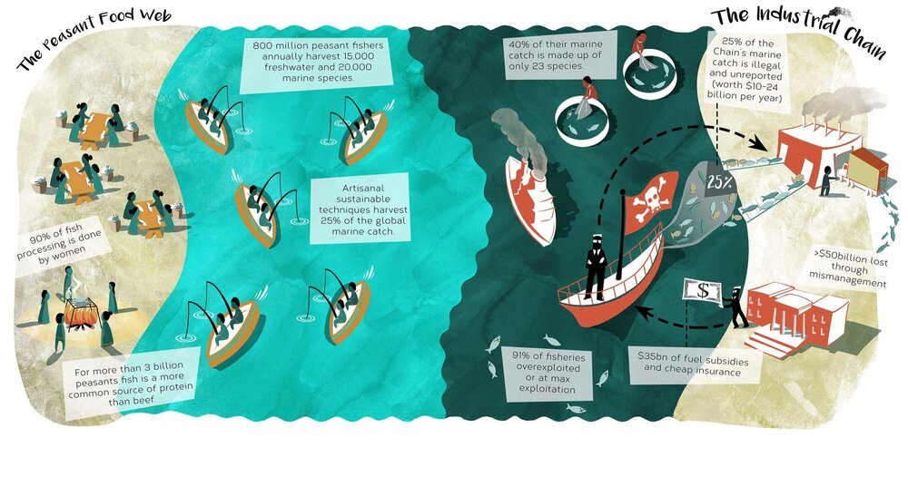 """ETC Group Infographic """"Who Safeguardes Our Fisheries?"""""""