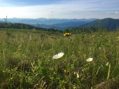 Purchase Knob  is a new section of the Great Smoky Mountains National Park with wonderful vistas from 5,000 feet, an impressive research center and a great hike on the Cataloochee Divide Trail.