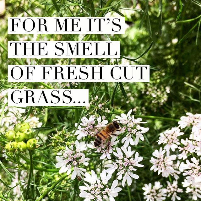 For me it's the smell of fresh cut grass, what screams spring to you? 🐿🌼🦋 • • • #spring2019 #wearehaywood #dailyhaywood #lifeinthesmokies #localsof828 #haywoodcounty #haynow #hayco #supportlocalbusiness #yourconnectiontoourarea #augmentedreality #engagedandenergized #828isgreat #themoreyouknow #discoverthis #discoverthat #discoverhaywood