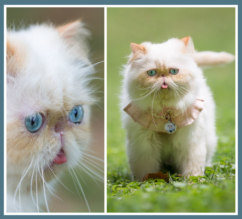 website cat.jpg