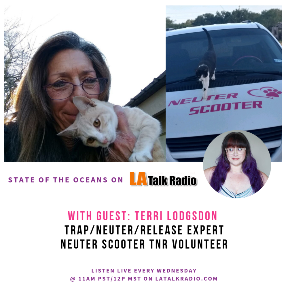 What to  learn more  about this topic?  Click here  to listen to ThatVeganWife on LA Talk Radio have this conversation about her own journey.