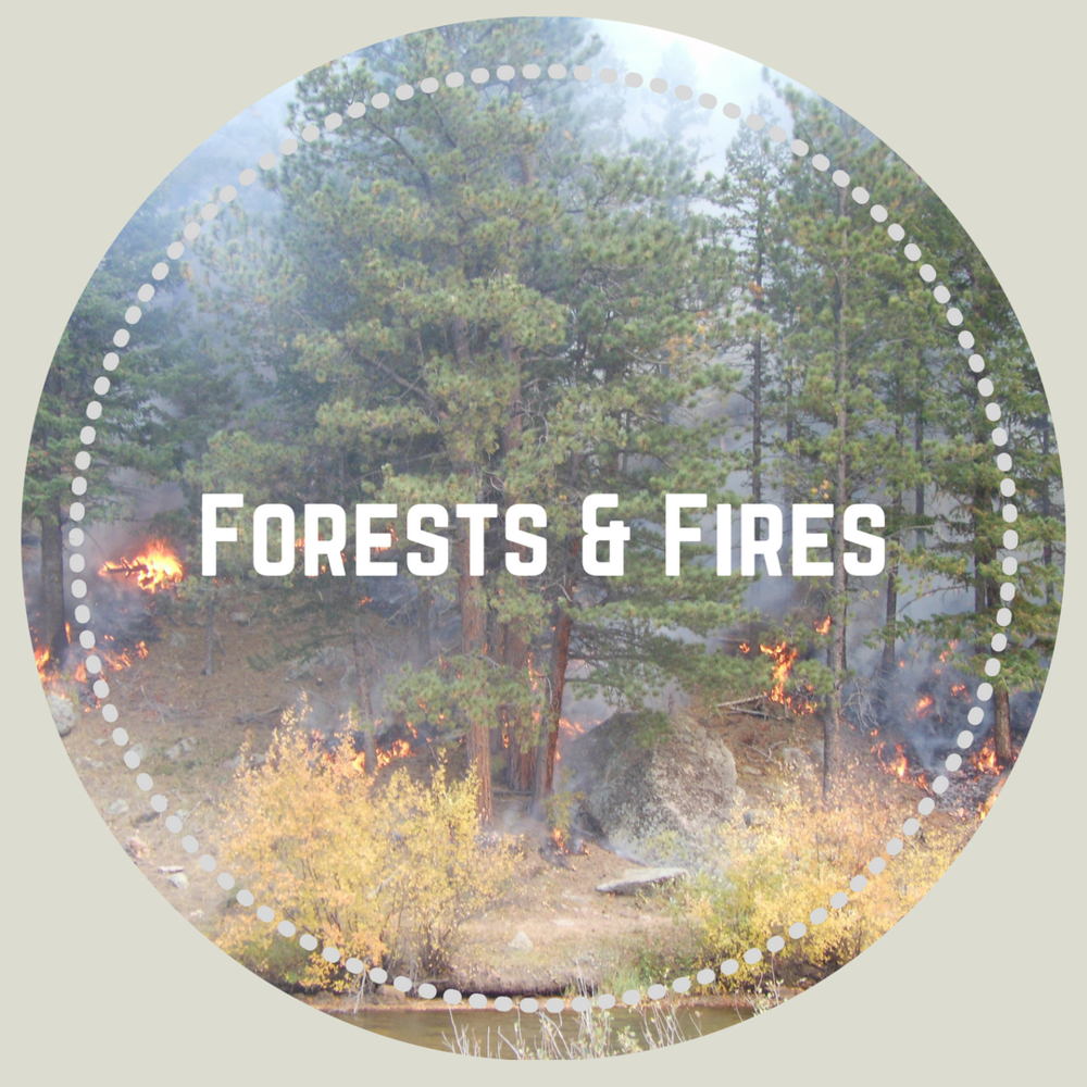 forests-fires-cprw.png