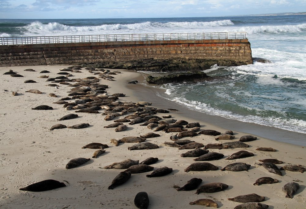 sea-lions-2225017_1920.jpg