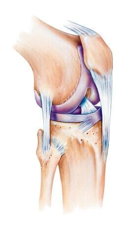 image-knee.jpg