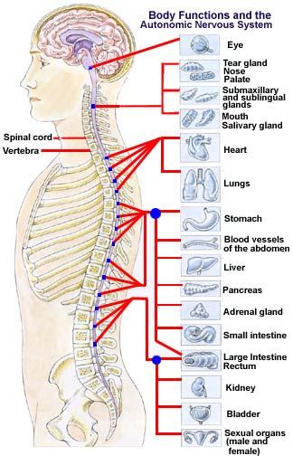 spine.jpg