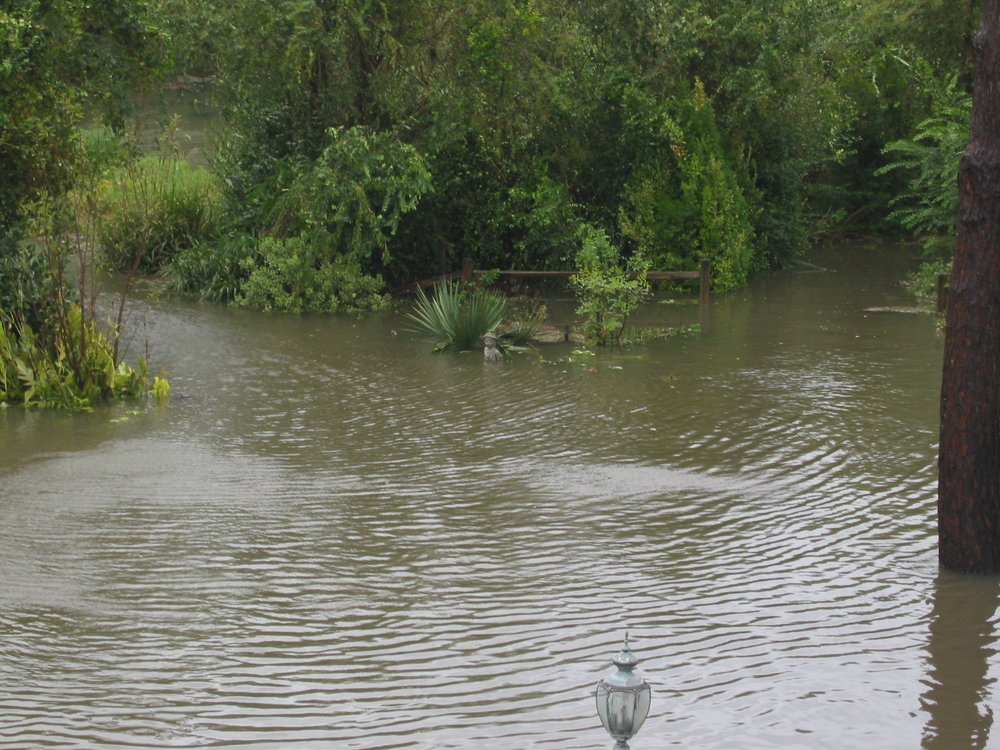 Pond yard isabel (13).JPG