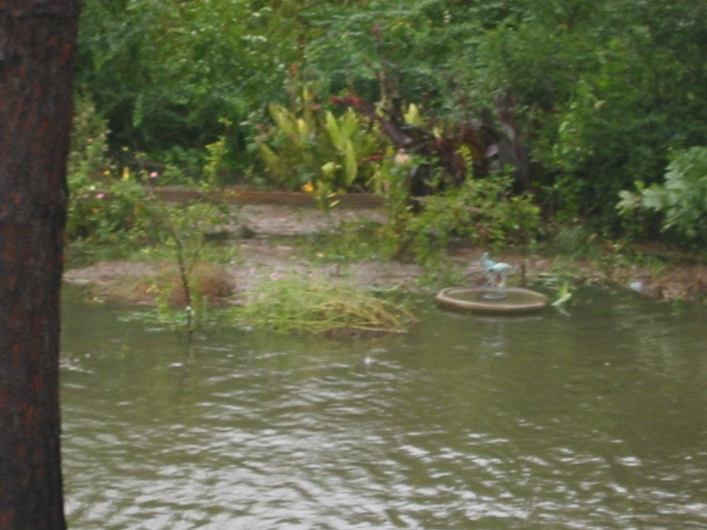 Pond yard isabel (14).JPG