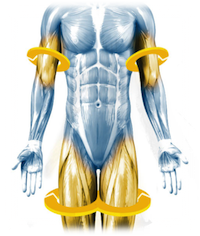 Compression Technology - Placing compression on the arm and leg muscles while exercising at a low intensity has been scientifically shown to create the physiological effect of high intensity exercise.Compression cuffs worn on the arms and legs safely compress the muscle to quickly build up lactic acid, mimicking the physiology of an intense workout that would typically take extensive time and effort.Compression builds metabolite concentration quickly and activates fast twitch muscle fibers. This triggers a systemic recovery response, including the natural release of anabolic hormones such as testosterone.