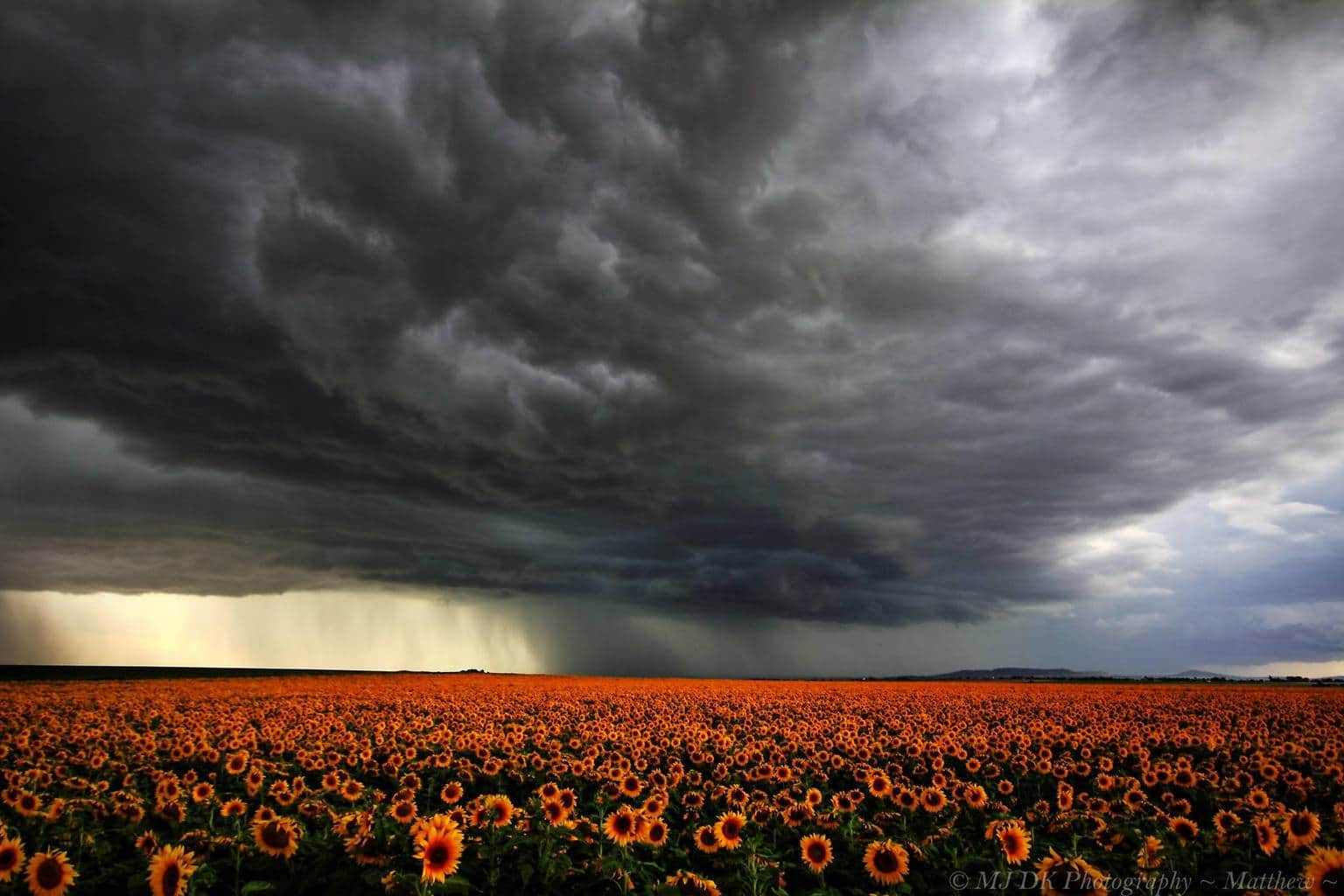 Here Is A Shot Of A Storm Cell That Passed Over Alora On The 26th Of March This Year. I Was Lucky Enough To Find A Paddock Of Sunflowers Still Out In Flower.. Hope You All Enjoy
