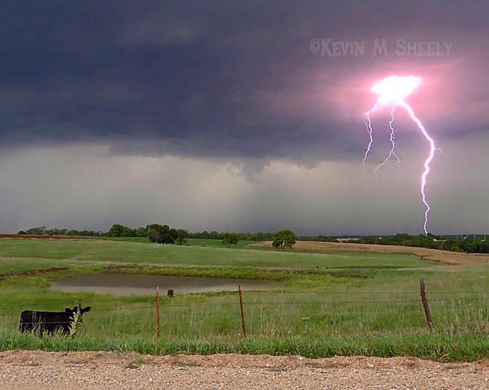 Cow and Lightning. September 9, 2014 near Marysville Kansas.