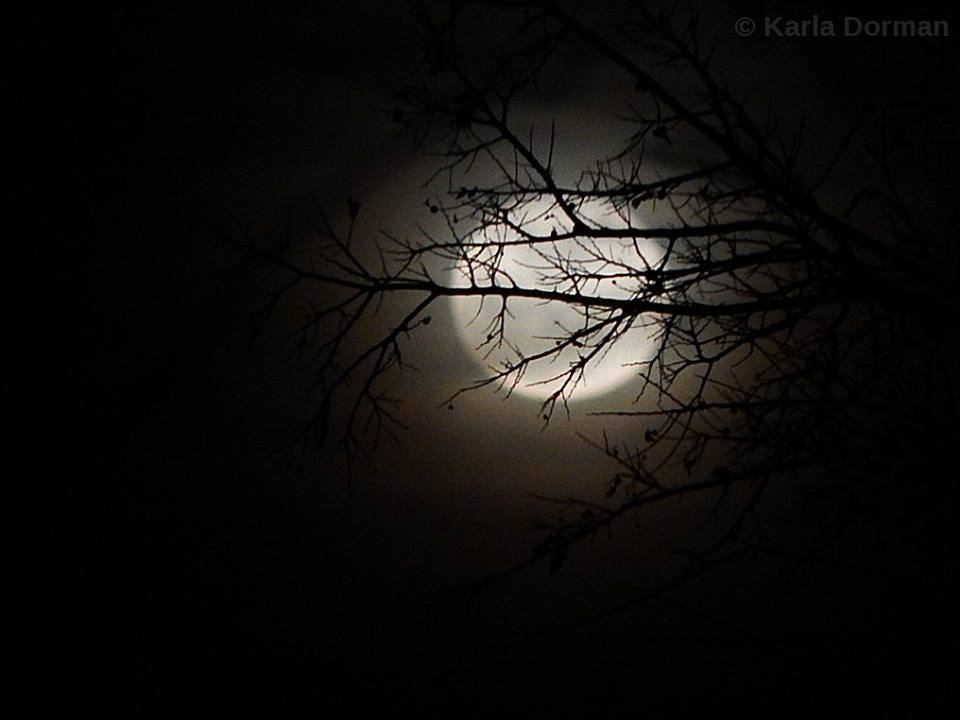 This evening's moon rise, through the trees here in Burleson, TX. THIS IS NOT A B & W PHOTO. Just the way it came out.