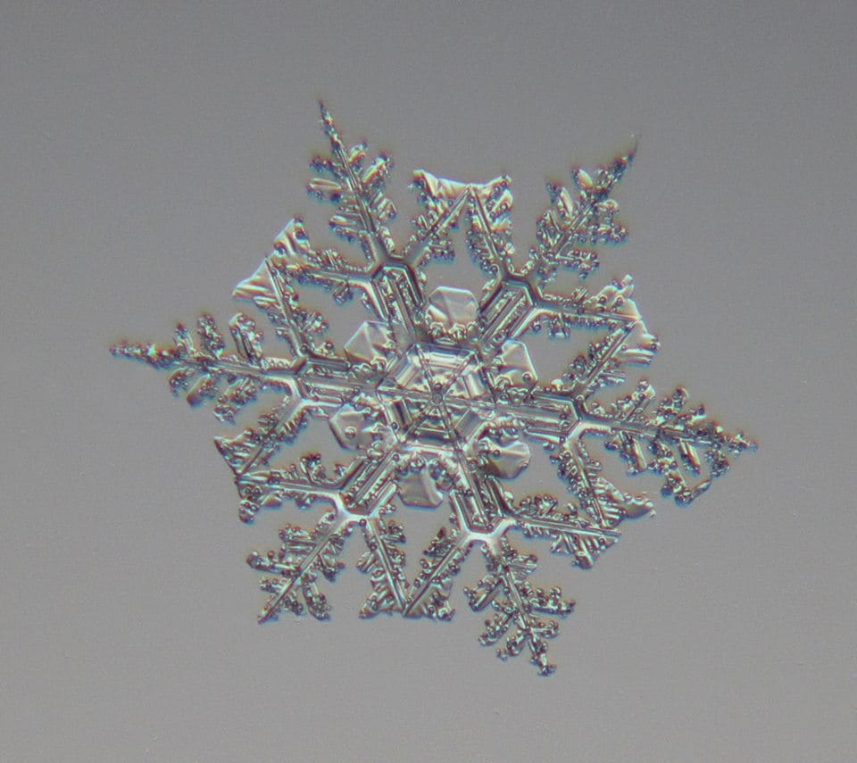 another day . . . another snowflake . . . this time a complex double-crowned dendrite . . . ledyard CT, 2/17/15, canon a4000, LBS lens, Snow Studio III . . . feel free to share and use for any personal, non-profit use.