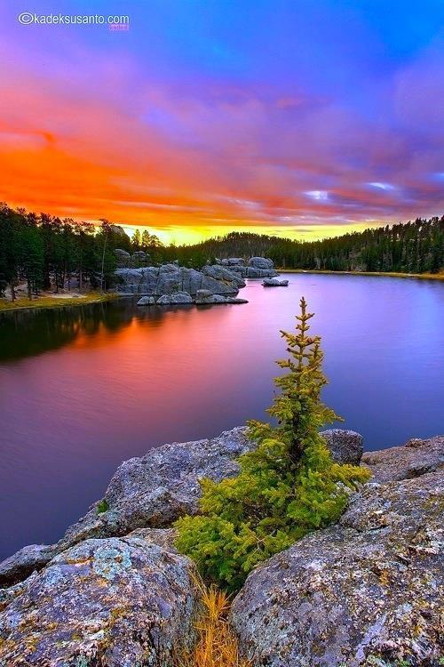'' THE BONSAI '' Sylvan Lake South Dakota