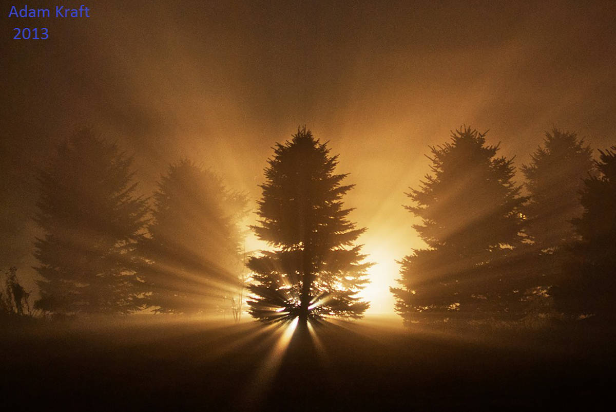 There is always a creative way to photograph fog at night. Spruce trees and one 500 watt halogen lamp and this is the result. Taken in 2013 in Spring Arbor MI.
