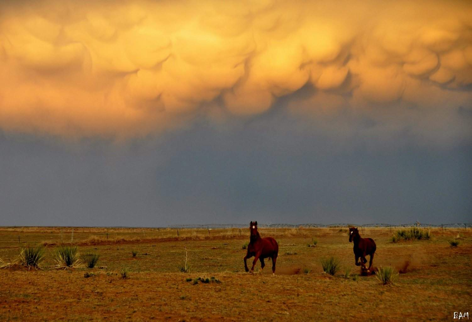 Texan Mammatus 8th May 2013 (Image 2) Another image of the sunset lit mammatus. While we had stopped to take photos, some curious horses bolted towards us. We thought they were going to jump the fence! lol