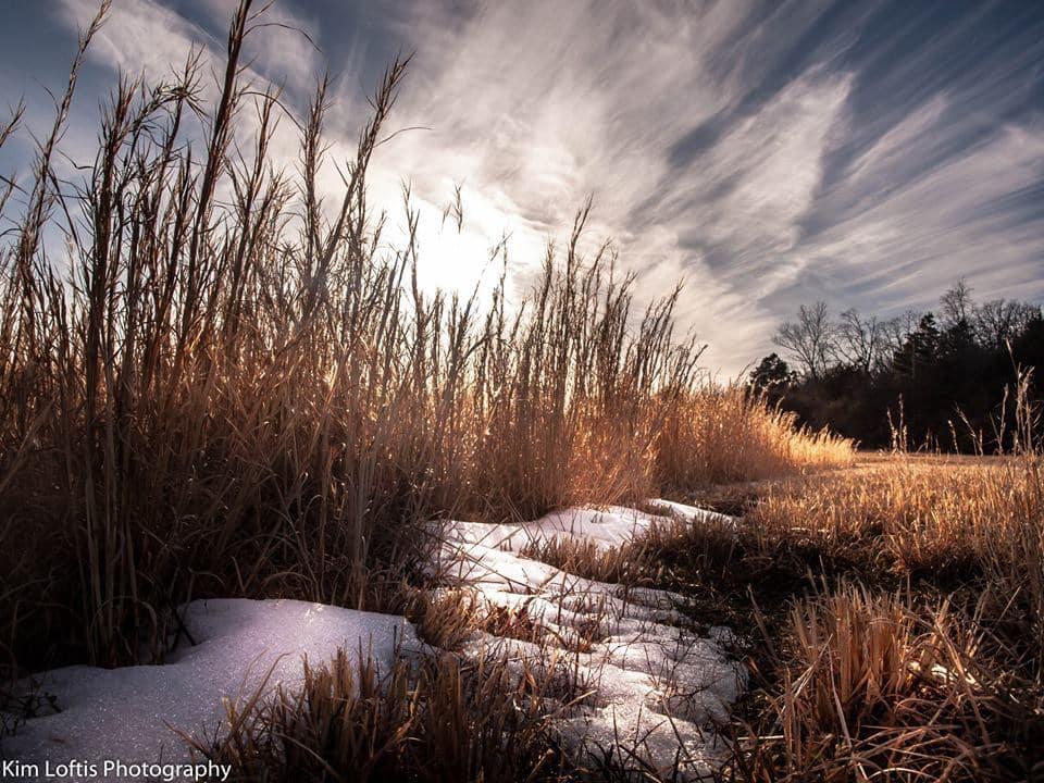 remains of winters grasp.. Arkansas.