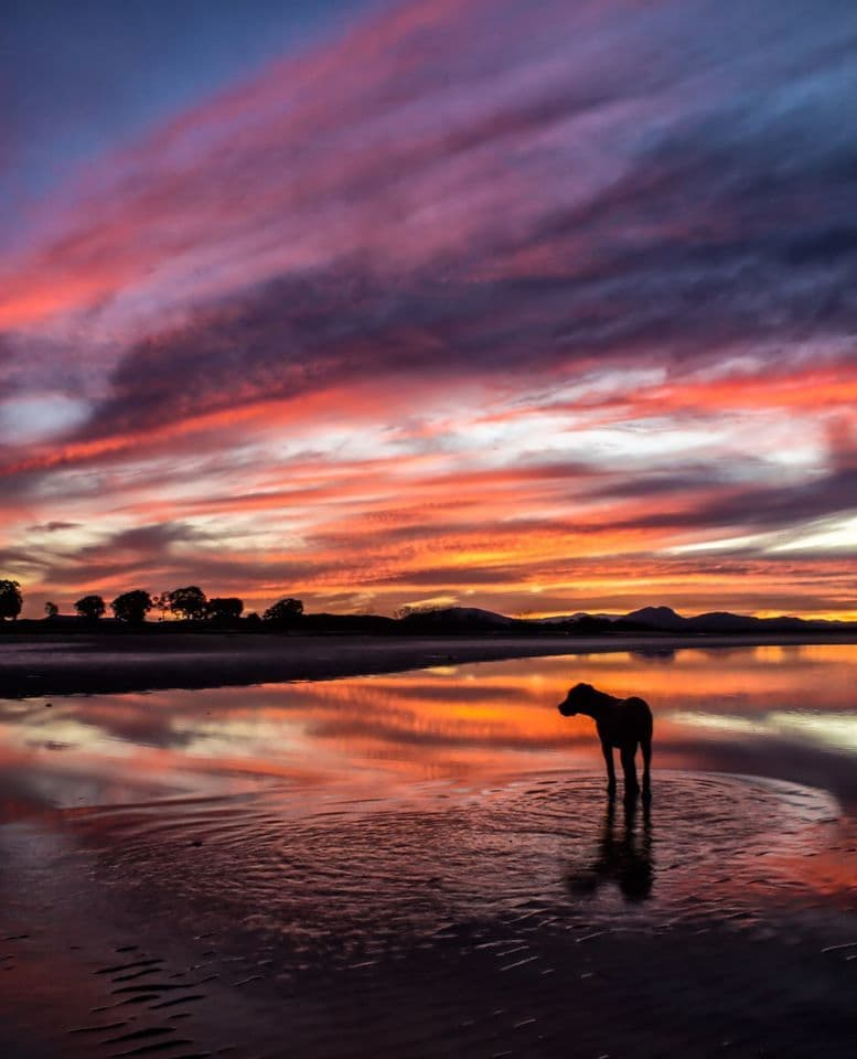 Sunsets are in full swing here in Mackay, Queensland. I think Ralph Winston was mesmerized lol. Had to quickly snap - 6 month old puppies don't stand still for very long!