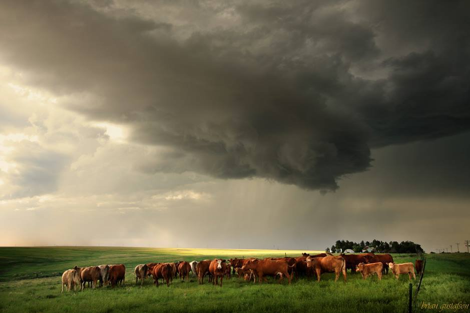 This is an image of the tornado warned cell that moved through the Lindon and Cope, Colorado area and eventually died near Goodland, Kansas on 6-6-2015. We've got cows.