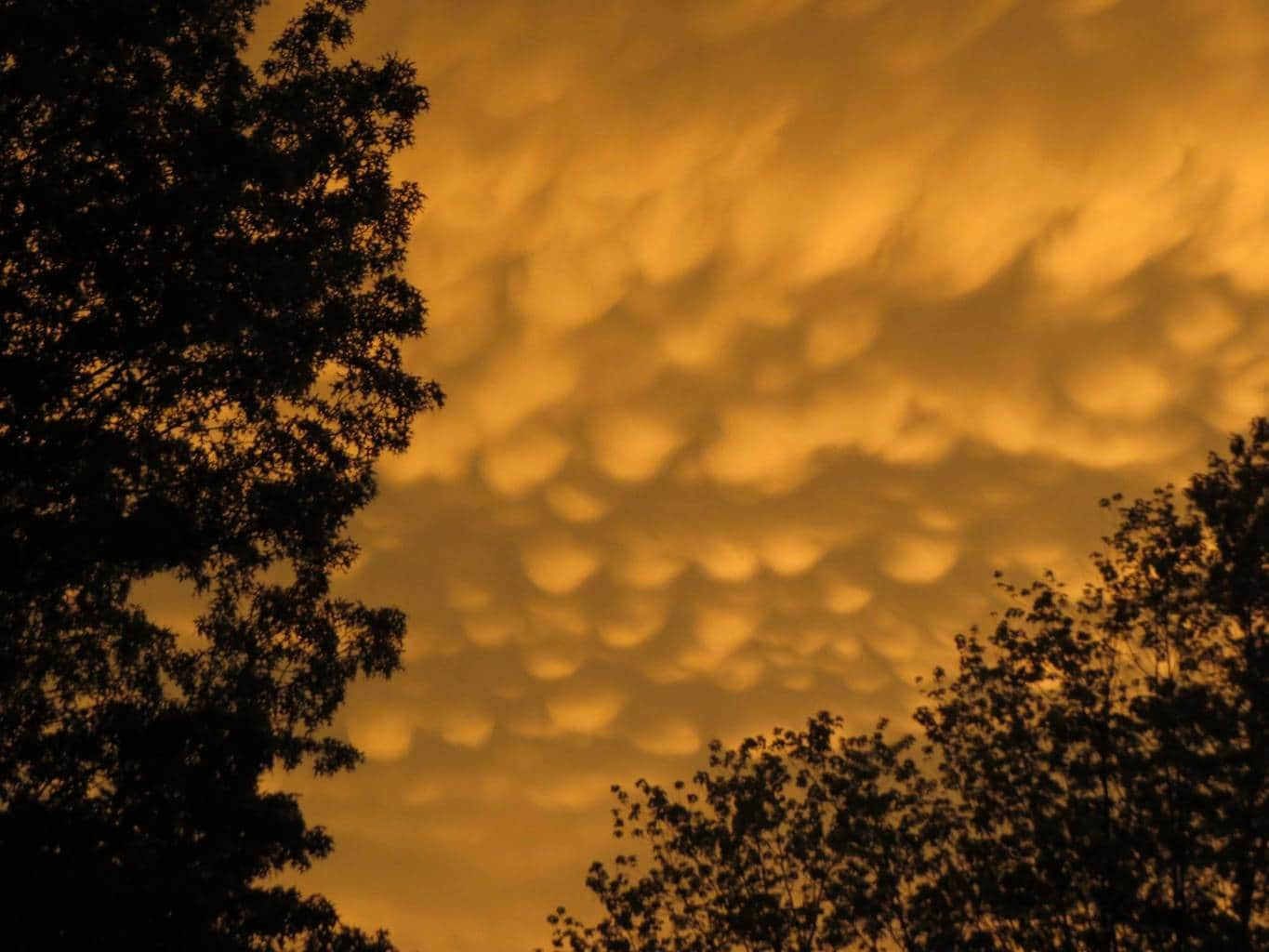 I finally was able to witness this cloud type smile emoticonMAMMATUS CLOUDS at sunset yesterday 6.23.15 , BEL AIR MD...after severe storms rolled by