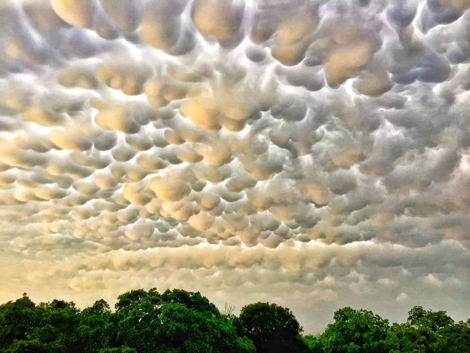 Memorial Day Mammatus: After a record day of numerous tornadoes, flooding and water-rescues...Austin, TX was treated to this unbelievable display of mammatus clouds. These crisp looking clouds hung around for a few hours! [Taken on 5/25/15]