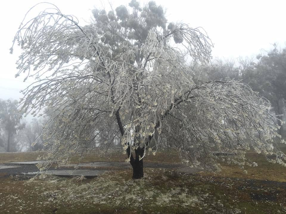 While most of you guys up in the northern hemisphere are enjoying summer and warm temperatures.. we had a big cold front move through here in Australia this weekend! Lots of snow... and even an ice storm.. I took this pic today near Coonabarabran, NSW Australia of what happens when you get rain that freezes on the surface it lands on.. in this case it amputated a few branches off this tree..