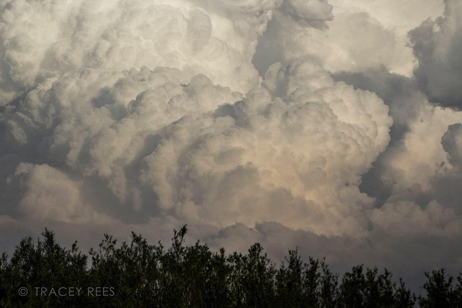 King Cumulus. Yesterday at the Fermilab in Warrenville, IL. Took SO many photographs, but massive cumulus are my favorite. Look at the beauty of this one! Storms didn't hit the area until a couple hours after taking this shot.