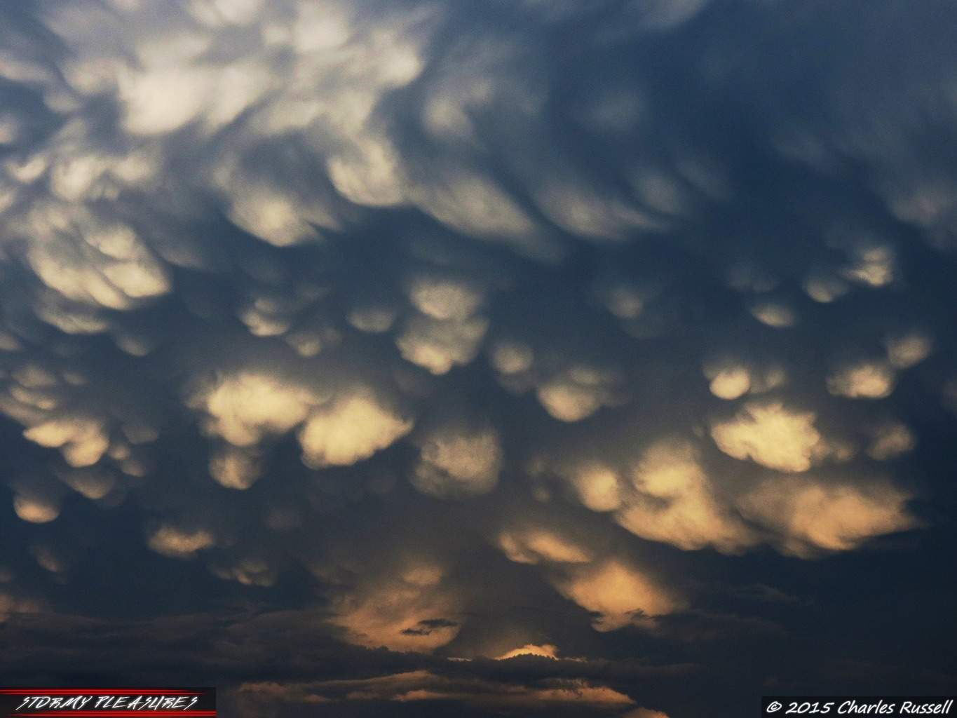 After the severe storms on 8/14/15 I was treated to one of the most amazing Mammatus displays I have ever seen in Michigan! The sky was just full of them. As the sun began to dip low in the western sky, it illuminated these beauties as the storms moved SSE away from me. I shot this in Greenville, MI. Awesome chase day!