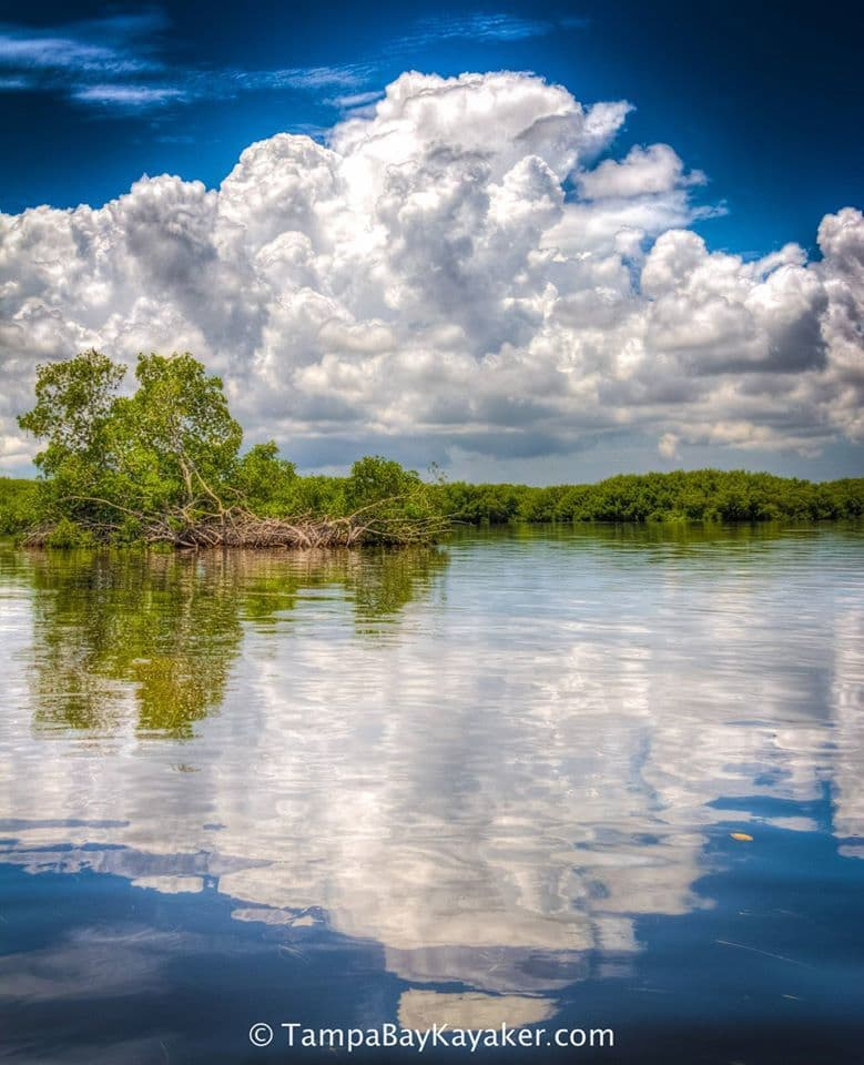 Mirror Mirror Tampa Bay - Mangrove & Cloud Reflections