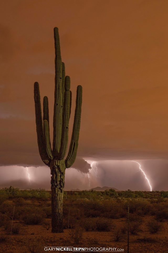 Monsoon in the Sonoran Desert was full force this evening. This was taken at 8:50pm Aug. 11. At 9pm the NWS Sent out a dust storm warning. You can see in the left horizon the dust building up. About 9:15 I was running to my truck to beat the dust. Glad I made the decision to run for the truck when I did cuz as soon as I got to my truck the dust hit hard.