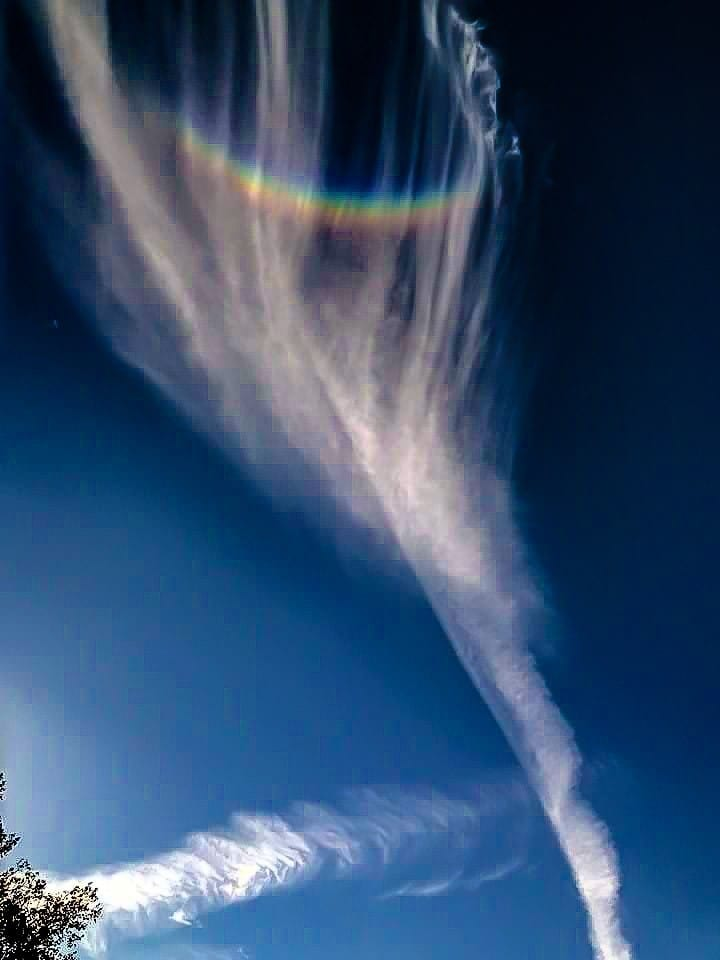 """Rainbow Feather"" taken in Spring Hill,Fl"