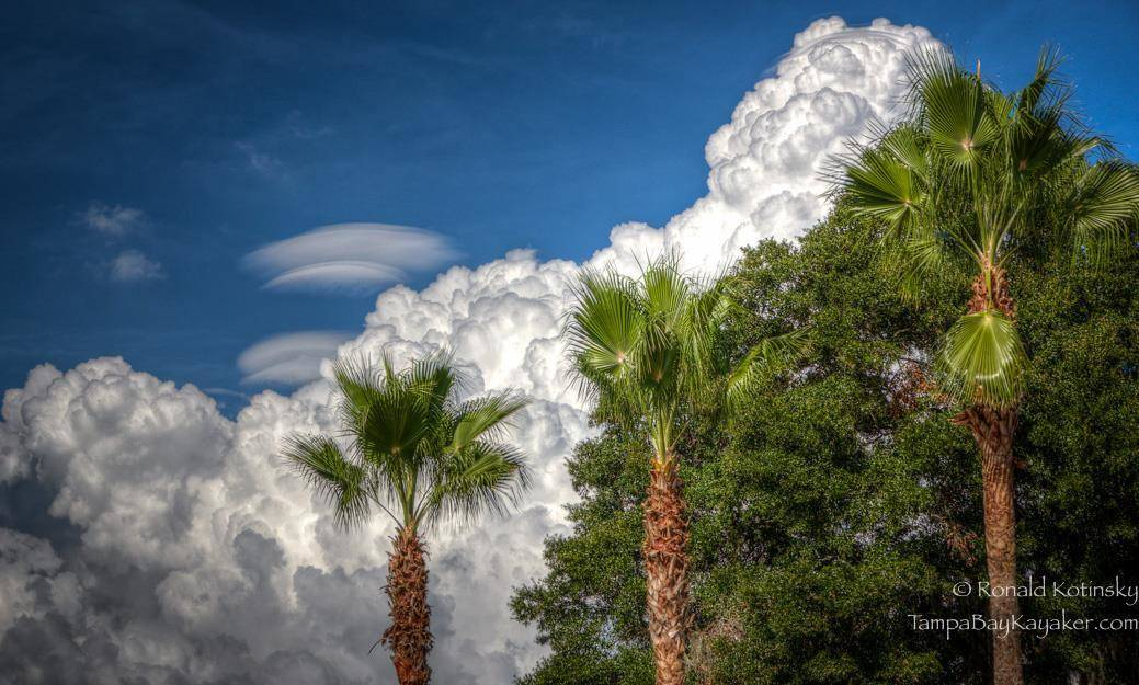 Palms and Flying Saucer Clouds - Valrico - Florida