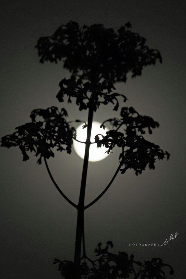 A moon rise..