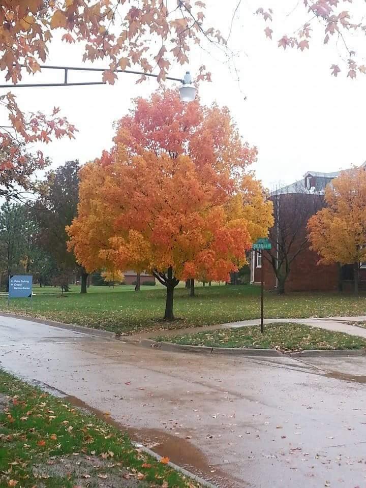Nebraska fall tree
