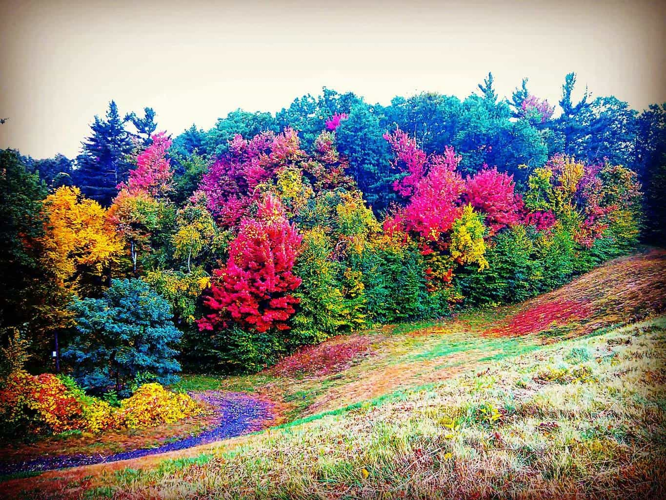 The hills are alive (with color). Overlook ReservoirFitchburg, Massachusetts 10/9/15