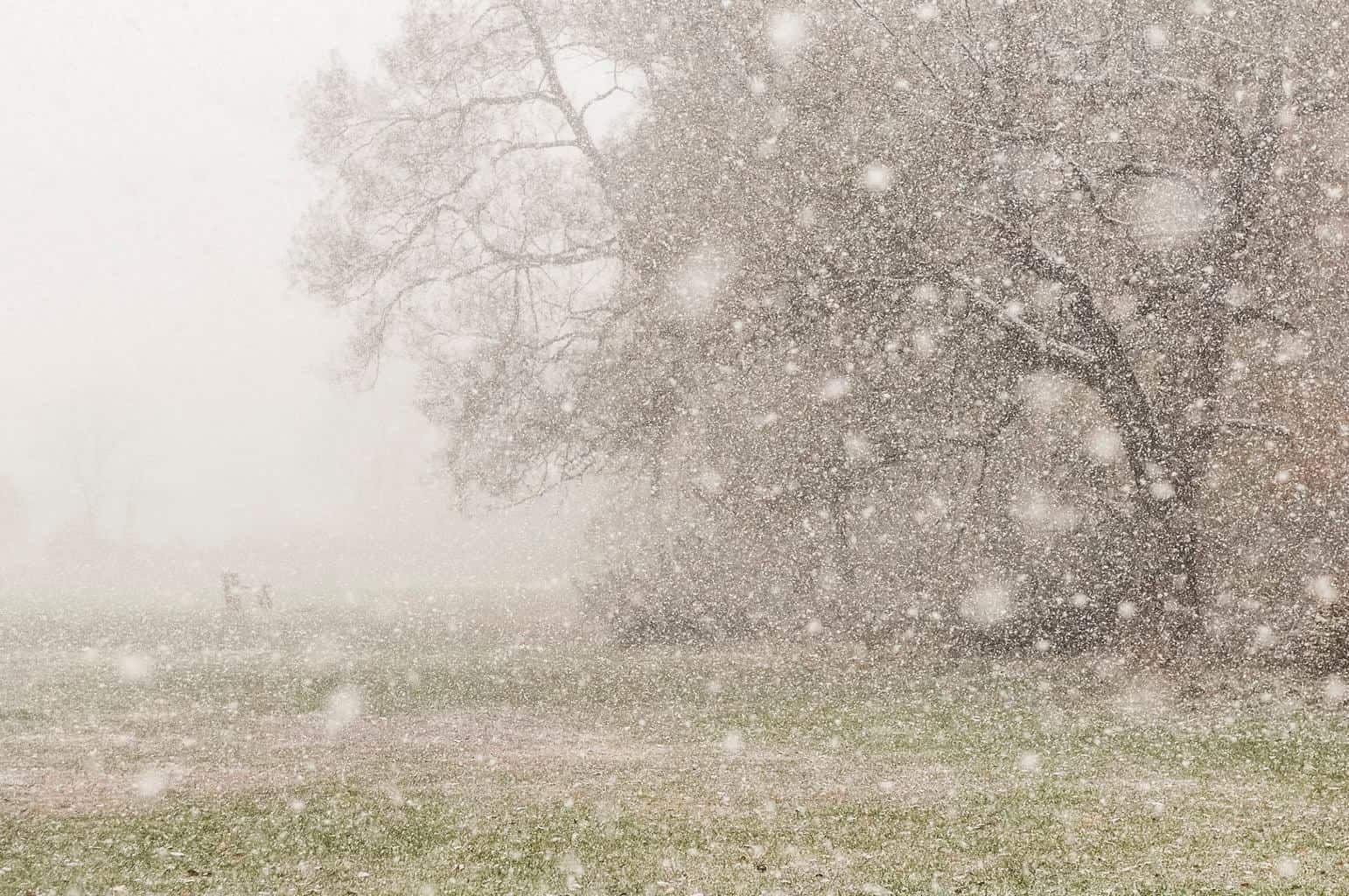 A convective snow squall I witnessed this evening in Underhill, VT. Vis briefly dropped to 1/4 mile.