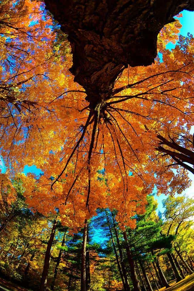 Looking up. Another shot from Southfield MI yesterday showing the true beauty of fall!
