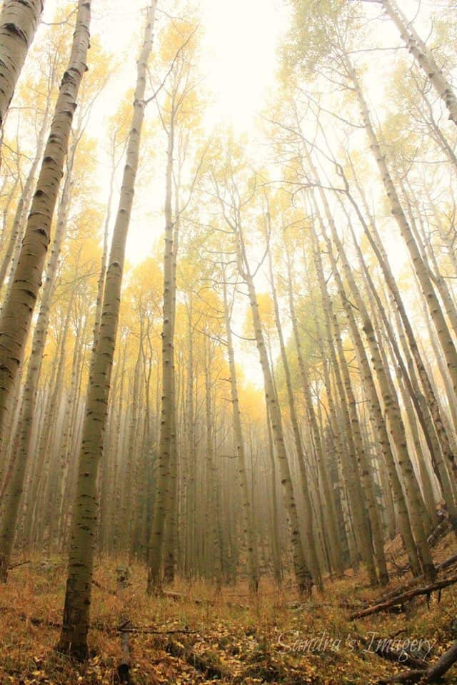 Went on a hike in northern AZ yesterday and hiking through all the fog was awesome add in the Aspens as their colors changed just put me in the mood for all things fall.