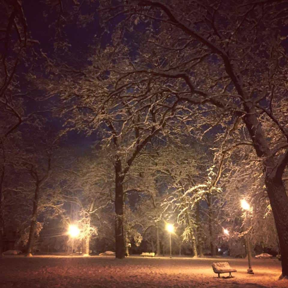 Winter wonderland magic! Kalamazoo, Michigan first snowfall of the season. 11/21/15.