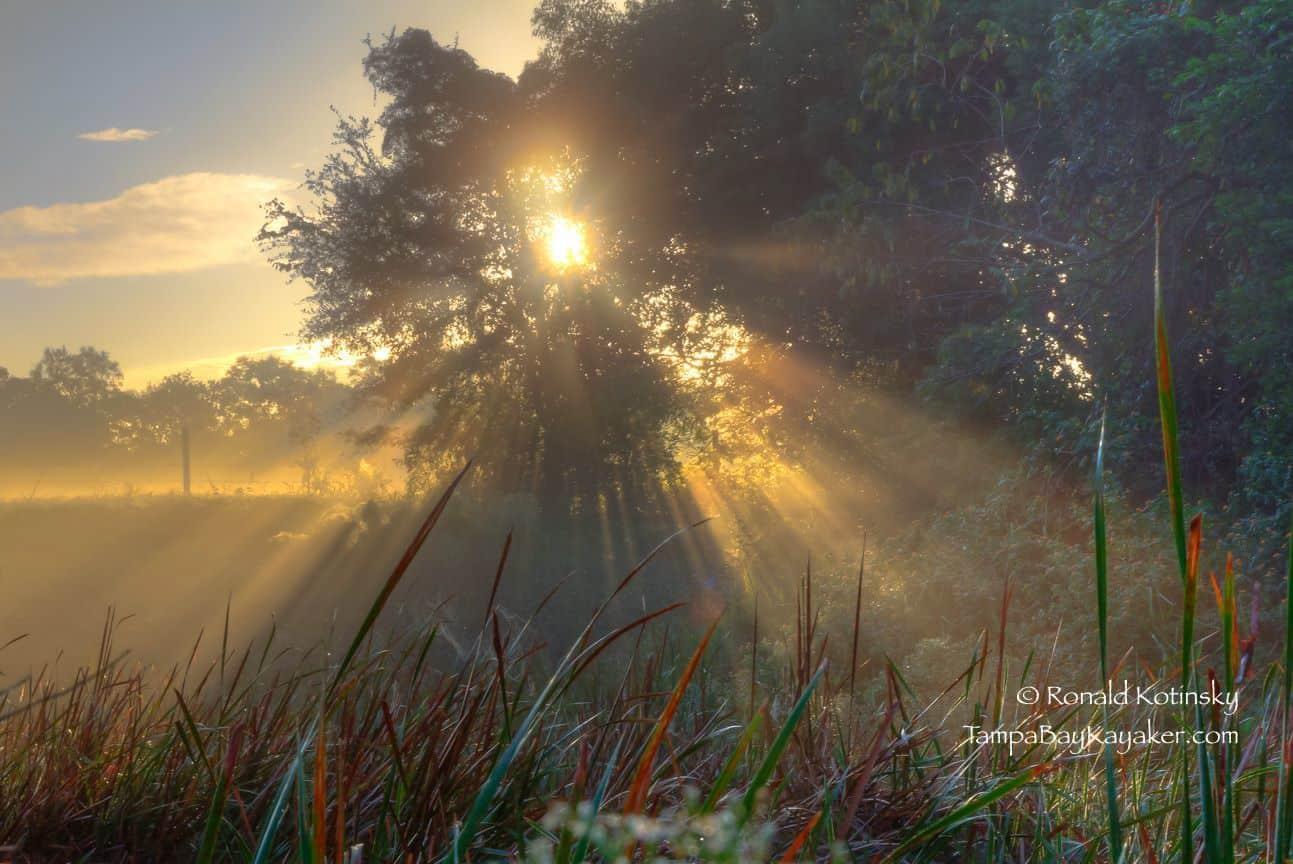 Rays of Morning Glory - 10-31-2015 - Valrico, Florida