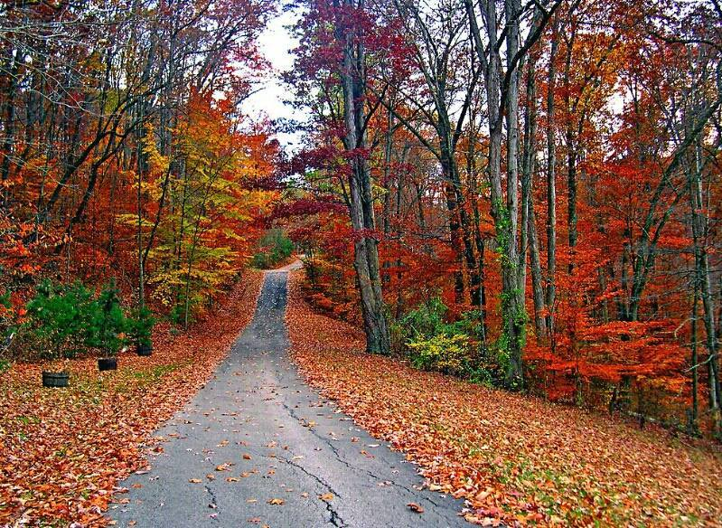 """This is my photo of another shot I took of """"Country Roads."""" I walked up past the white fence to get a deeper view of Autum and the different shades of leaves. My Dad built this special road for a dear friend of his who built a beautiful mansion that sits at the top of the hill. This is in northeastern Kentucky on Rockgate Road in Flatwoods, Kentucky. You can get there to see this beautiful place from either Indian Run Road, Short Holler, or turn left off of Route 207. I call this one """"Country Roads 2."""""""