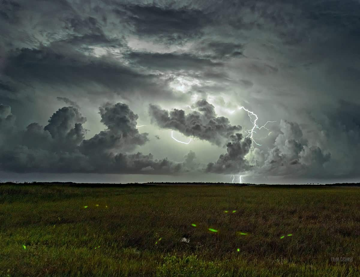 Lightning bugs and lightning in the Everglades. From June.