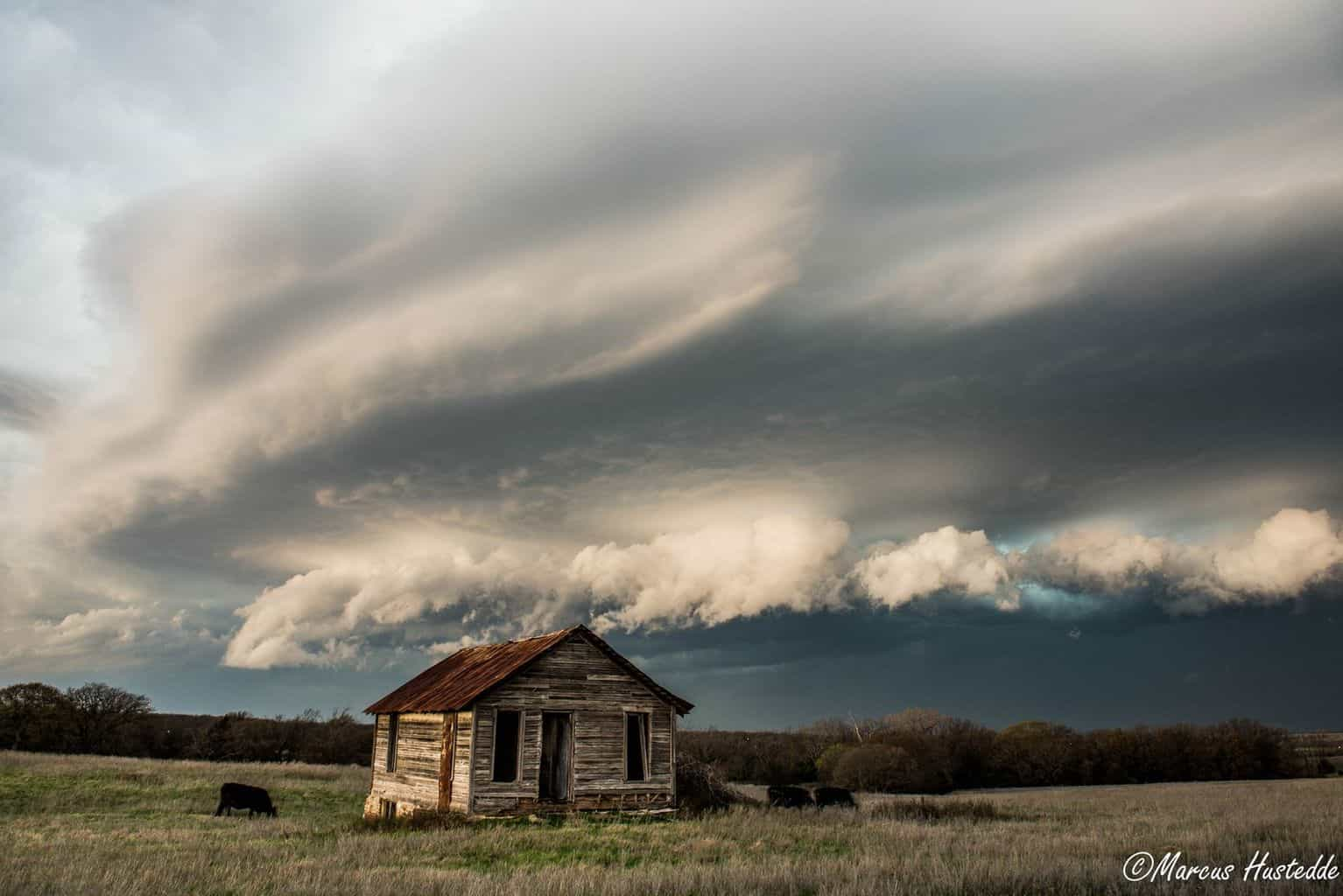 Shawnee, OK March 25, 2015...approaching shelf cloud with an old prairie house and grazing cows.