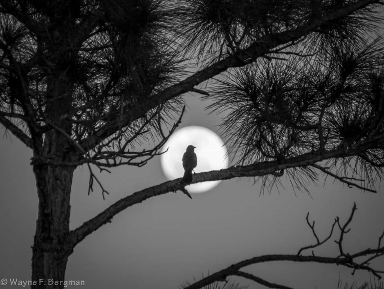 Moon Bird, clear night in Florida.
