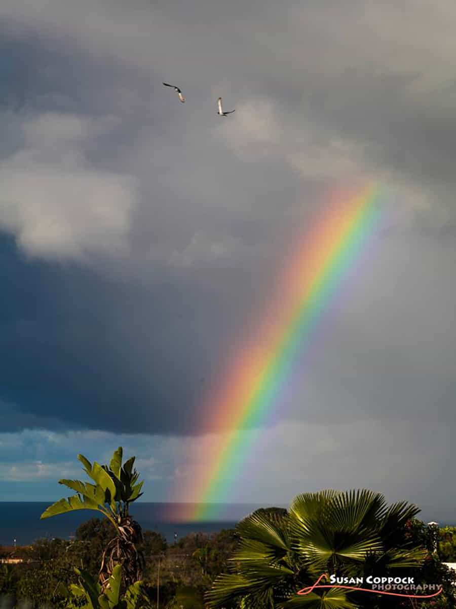 Took this rainbow from behind the school where I teach in Encinitas, California. It was the brightest rainbow I have ever seen and I love how it landed in the water. (And two seagulls flew by at just the right moment!)