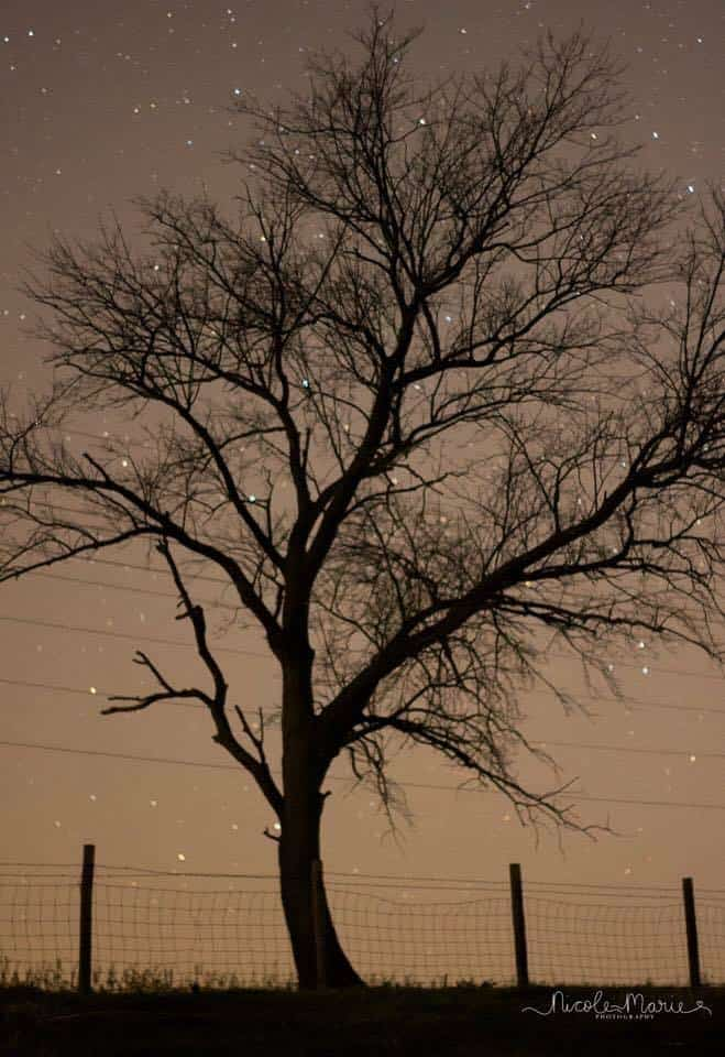 Didn't see any northern lights in northern Illinois but it was still beautiful