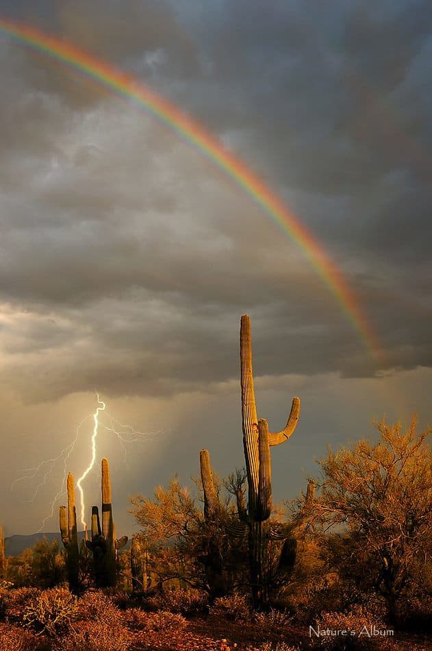 One of my favorites from this past summer! This was taken in Phoenix on June 5, 2015 and it was the first time since keeping records that Phoenix ever had rain on that date. Normally it is still bone dry and we are dying for the monsoons to begin. It was an extremely stormy day with a fair amount of rain, lightning and rainbows. I felt very lucky to get a shot like this and the best thing was, it was my birthday, so it was like a gift from Mother Nature
