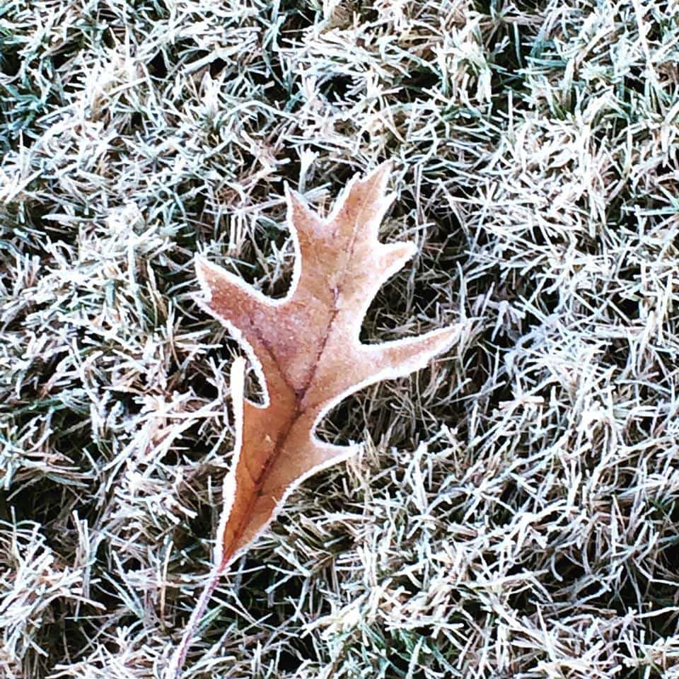 My first photo here. I thought it was beautiful the way the frost outlined the leaf. Reminded me fall is almost over and winter is around the corner
