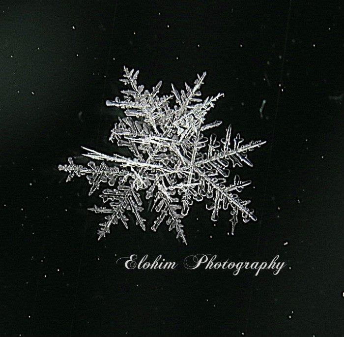 Snowflake cluster I captured last year, so far no snow this year!